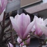『3月の東大和③』の画像