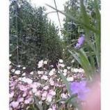 『野菜畑』の画像
