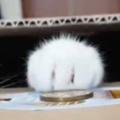 【ネコ】 お金を貯めるならどっちがいい? 本物とおもちゃの猫の貯金箱 → 並べてみたらこんな感じ…