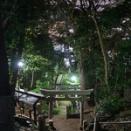 夜散歩のススメ2315「熊野神社参道、木々の間の街灯り」