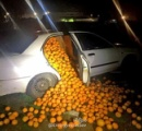 4トンに及ぶオレンジ窃盗犯 車にオレンジを積みすぎてバレバレで捕まる