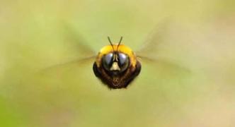 ハチ「ブーン」 彡(゚)(゚)ヒエッ
