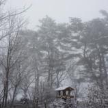 『雪の朝のチン太』の画像