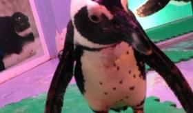 【日本のお店】   東京 池袋に 「ペンギンバー」 なるものが オープンしたらしい。    海外の反応