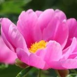 『花と暦』の画像