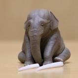 『ゾウの絶滅に影響する日本市場』の画像