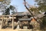 神社×桜!若宮神社の桜も満開になってて花見されてる人の姿もチラホラ