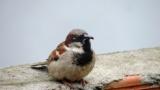 【怖い】弱った雀を助けた友人の思考がマジでヤバイかもしれん