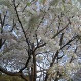 『お花見☆』の画像