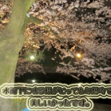 『富山市城址公園へ1人夜桜観にいってきました!』の画像