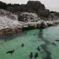 葛西臨海水族館で大量のペンギンに驚愕!種類豊富だけどウジャウジャしすぎてびっくり!