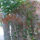 『ツル性植物』の画像