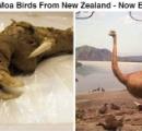 【画像】絶滅した鳥がこれ