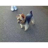 『犬友』の画像
