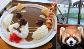 【食】 日本の 山口県の動物園に 「レッサーパンダのカレー」が登場。  可愛すぎて食べられないよ・・・。  海外の反応