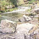[釣り日記]富士川水系 芝川の写真