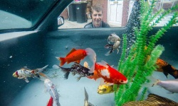 【画像あり】自動車を金魚の水槽にした男が話題に