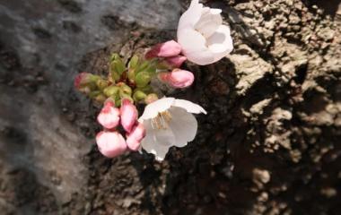 『里山は花盛り』の画像