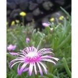 『花とおじさん』の画像