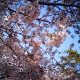 『春霞』の画像