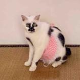 『猫用エプロンを作ったよ』の画像