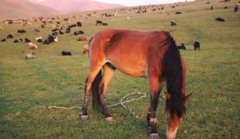 遊牧民に憧れたからキルギスで臆病な馬に乗って旅を始めたバカだけど【後編】