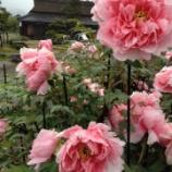 『濡れ蘇ぼる 花競』の画像