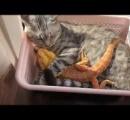 トカゲをぎゅっと抱きしめて寄り添う猫がかわいい ※動画