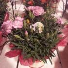 『5月13日は母の日です(小戸店)』の画像