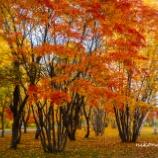 『秋ずく間もなくSoon after autumn.』の画像