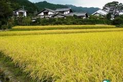 【中国BBS】日本の田舎の家がスゴすぎると中国人が称賛!「戦争しなければ。そうすればあの家は俺たちのもの」