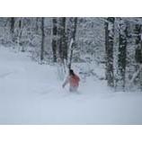 『オープン間近の雫石スキー場』の画像