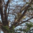 『ウグイス(鶯) ~庭に来る野鳥~』の画像