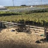 『まるき葡萄酒へ行って来た。2017年10月ワイナリー訪問記【勝沼日帰り】④』の画像
