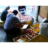 『りんごの醪つくり』の画像
