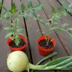 スーの家の自然栽培で家庭菜園12ヶ月