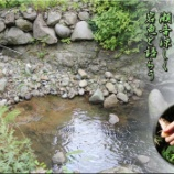 『岩魚と語らう』の画像