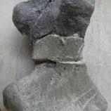 『大腿骨のクリーニング終了』の画像