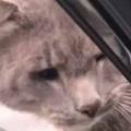 【ネコ】 家の近くで車をとめてみる。会いたかったにゃ~♪ → 近所の猫はいつもこうなります…
