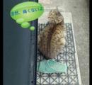 NNN 猫よけシート無効化の特殊訓練法を編み出し無力な人類をあざ笑う