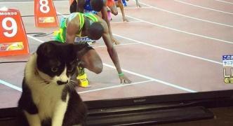 Twiter民「うちのヌッコがオリンピック出てたww」カシャ