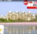街にピンクの湖 実はアノ鳥…コロナ影響?
