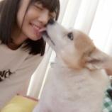 『【乃木坂46】北野日奈子の愛犬チップ、発病により失明していた・・・北野は資格取得の決心へ・・・』の画像