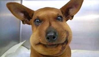 可愛らしいけど可哀想…蜂に刺されて残念な姿になってしまった犬猫たち