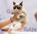 【訃報】「不機嫌ネコ」のグランピー死ぬ、7歳  フェイスブックに850万人フォロワー