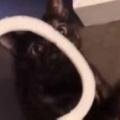 うちのネコが「輪っか」で遊びたがる。しっぽにポイっ♪ → 猫はこうなる…