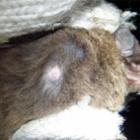 『ニートを抱えたユビナガ母さん』の画像