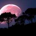 4月の満月はスーパームーン!今年一番明るく大きな月となるピンクムーンが4月7日深夜から8日、地球を明るく照らす