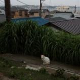 『江ノ島 その3』の画像