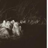 『ジンバブエのライオン・セシルの子供たち』の画像